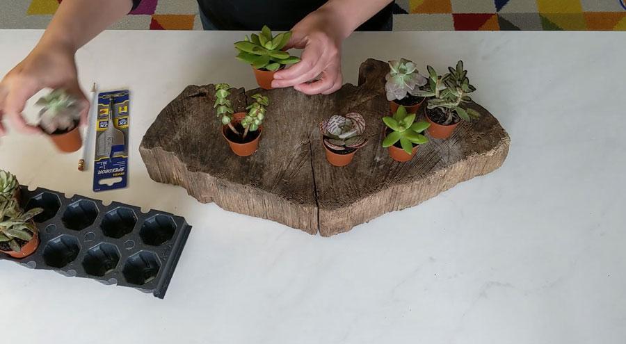 arrange your succulents