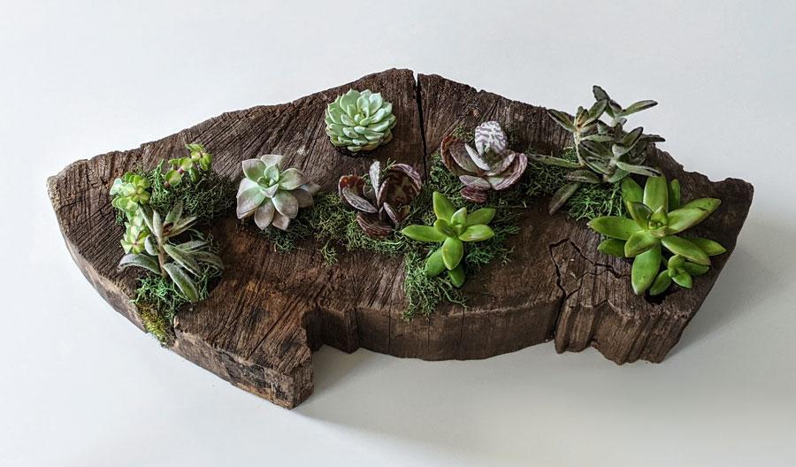 planter overhead