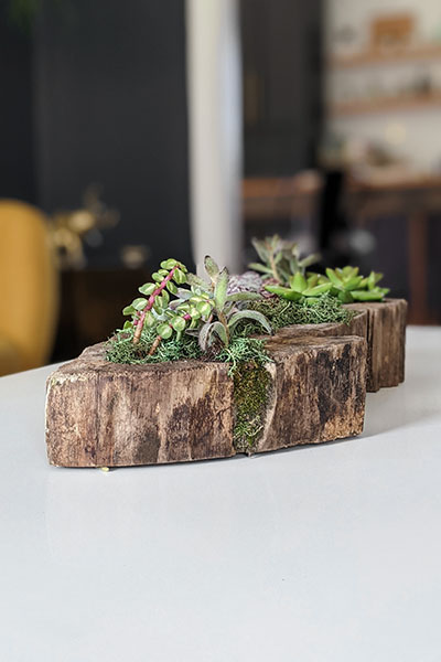 How to Make a Succulent Planter (Plus Tips to Keep It Healthy!)