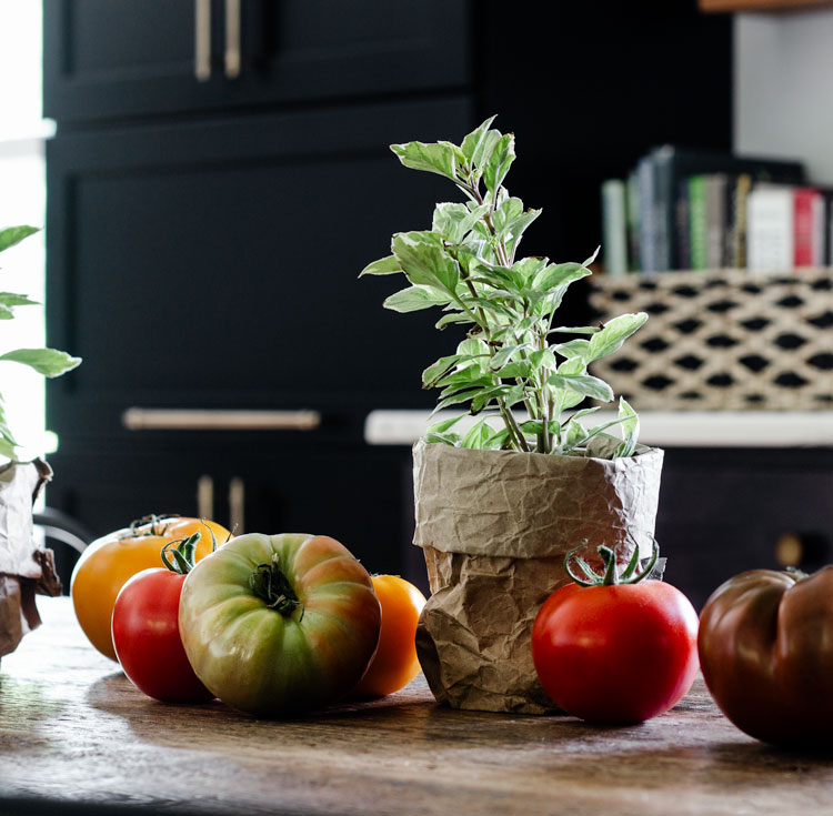 Heirloom tomatoes and variegated basil on a vintage wood table.